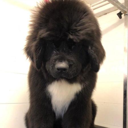 ock-grooming-1